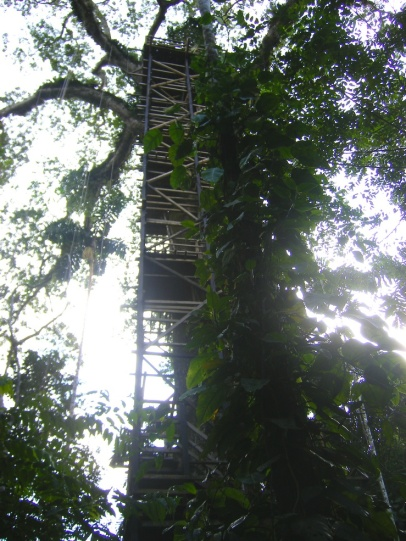 TreeTower1