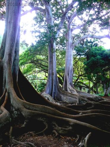 Hawaii13 054