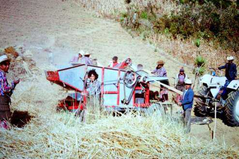 Threshing wheat, Quetzaltenango