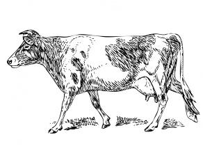 gurnsey-cow-clipart-illustration