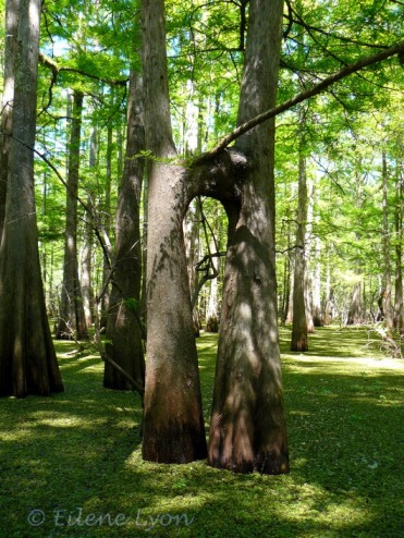 Louisiana2012 069