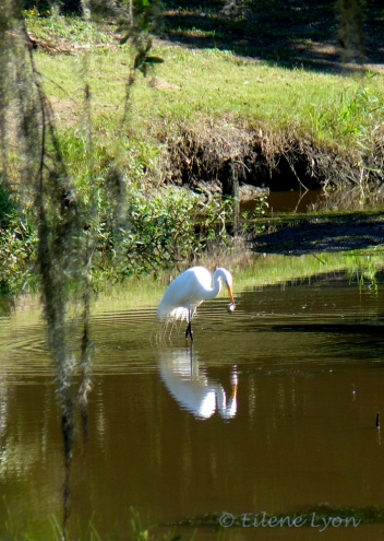 Louisiana2012 123